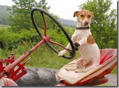 drivedoggy