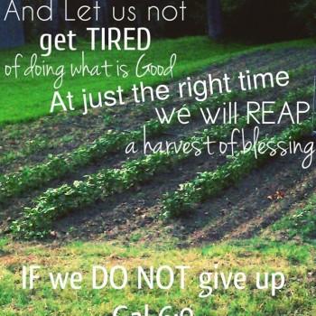 Keep Sowing Good
