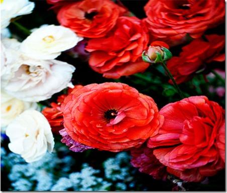 SpringFlowersFreeStockPhotoLoveFromGingerBlog